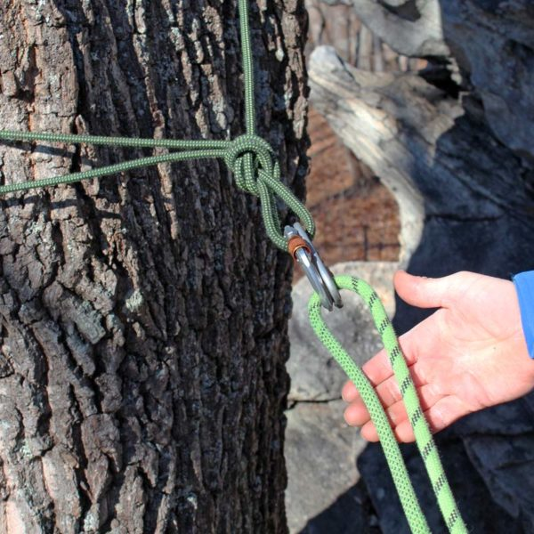 A simple top rope climbing anchor build by tying a cordlette around a tree with an overhand knot and clipping with two opposite and opposed locking carabiners.