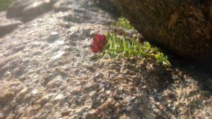 alpineflowerglaciergorge