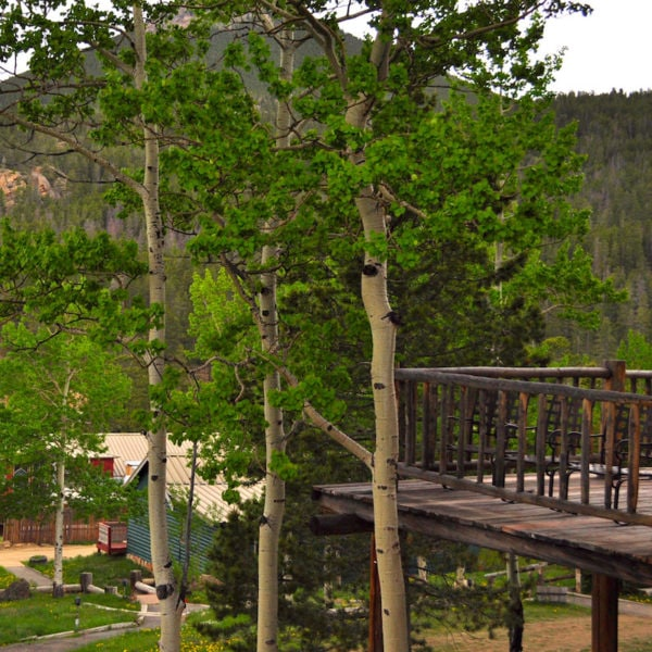 The deck of a lodge reaches out over the aspens at Doa House in Estes Park, Colorado.