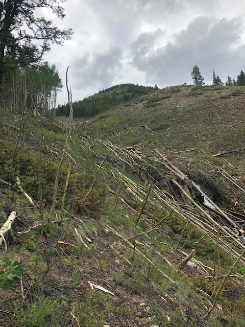 A forest that has been wiped out by an avalanche on Independence Pass during the historic avalanche cycle of 2019.